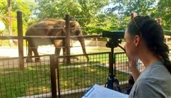 Leah Mucciarone observes elephants at Smithsonian Zoo.