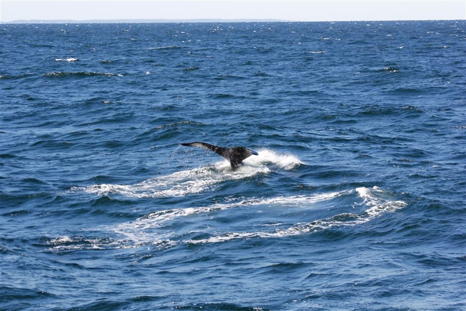 Students Observe Whales in Cape Cod Bay   Tabor Academy