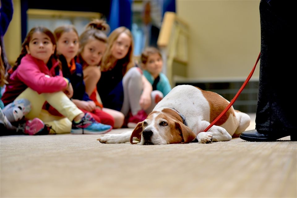 First graders met a professional dog trainer