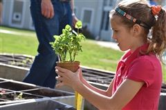 Fourth graders and parents planted seedlings in the Learning Garden