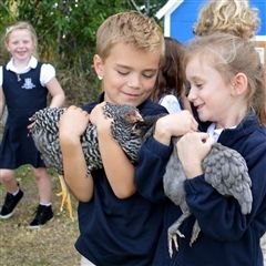 Kindergarteners get Clucky with Resident Chickens