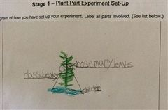 First Grade Science Student Example
