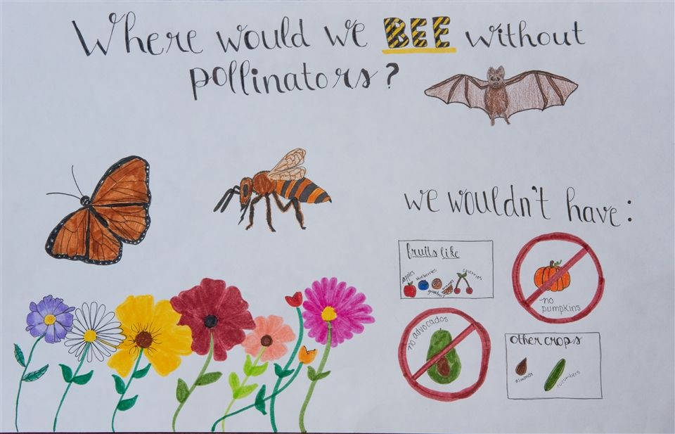 Alexis B.'s winning entry to the PA Conservation Department 2020 Poster Contest.
