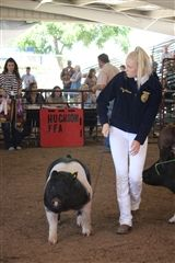 Kristi Johnson is showing her Champion FFA Market Hampshire pig.